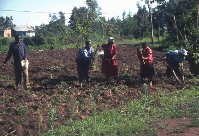 Soil Acidification in Western Kenya – What to do about it